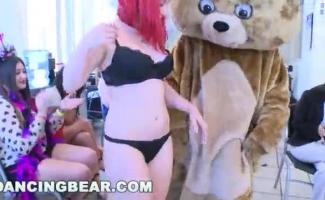 Urso Dando O Cu