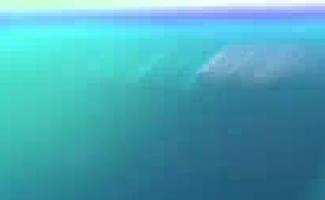Vídeo Pornô Mulher Gorda