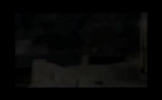 Vídeo De Sexo De Animais