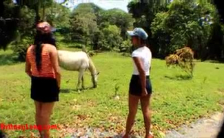 Zoofilia Cavalo Comendo Burro