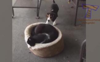 Gato Maluco Fode Primo Entediado Antes Do Sexo