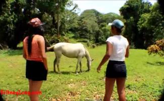 Sexo Sexo Com Cavalo