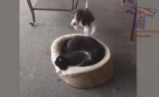 Sam I Cat Porno
